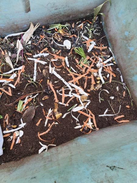 Cung cấp sinh khối trùn (trùn giống) nhỏ lẻ xử lý rác  giá rẻ ship trong ngày tại HCM.