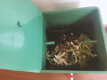 Cách nuôi trùn quế xử lý tại nhà đơn giản dễ nuôi nhất
